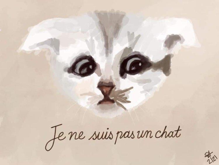 Je ne suis pas un chat